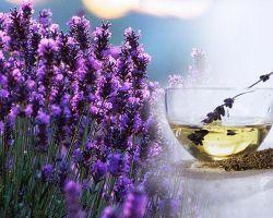 Лавандовый чай: полезные свойства и рецепты