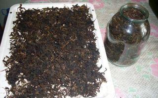 Как ферментировать иван чай в домашних условиях?