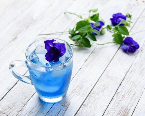 Особенности и полезные свойства синего чая из Таиланда