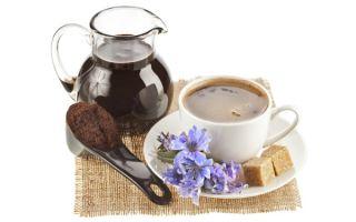 Чай из цикория: польза и правила заваривания