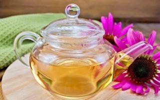 Чай с эхинацеей: полезные свойства и рецепты