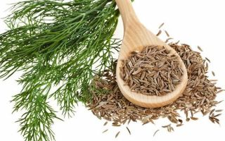 Чай с фенхелем: полезные свойства