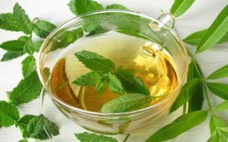 Рецепты чая с эвкалиптом: как правильно заваривать?