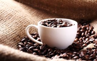 Особенности кофе марагоджип