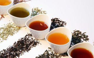 Основные виды чая и их особенности