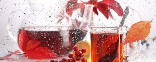 Чай из рябины: полезные свойства и рецепты