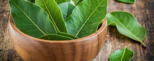 Польза и вред чая с лавровым листом