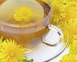 Полезные свойства и рецепты чая из одуванчика