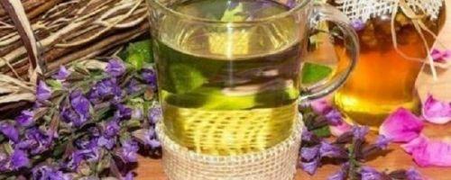 Как пить чай с шалфеем: его полезные свойства
