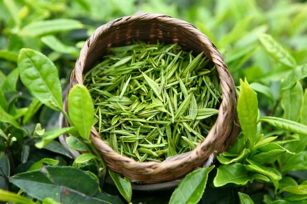 Зеленый чай с лимоном - польза и вред