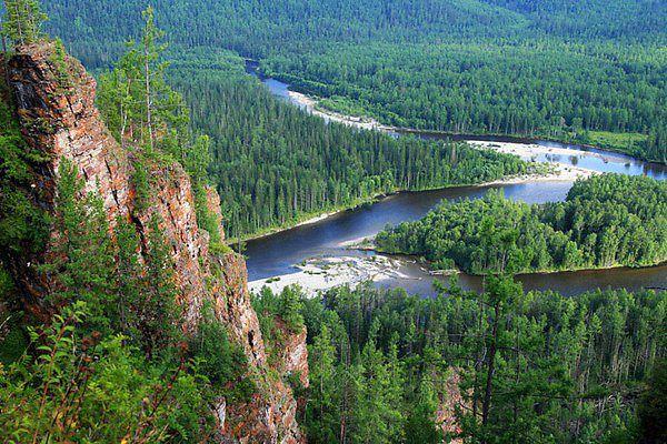 сибирский лес, где растет иван -чай