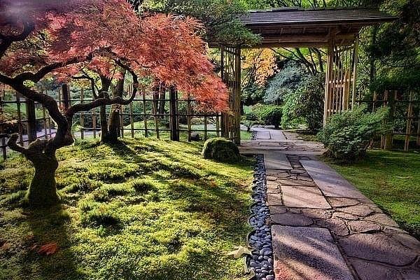 Чайный сад