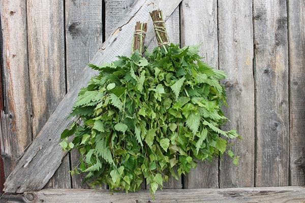 Как засушить растение
