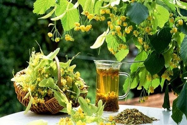 Липовый чай при беременности, можно ли пить беременным чайный напиток с липой