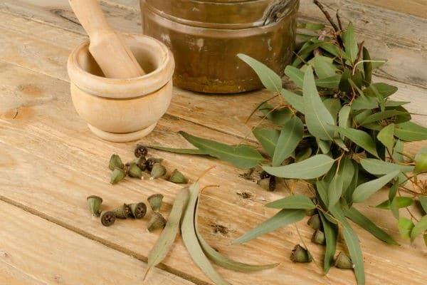Рецепт при ангине и стоматите