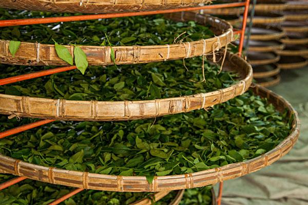 Чайное производство