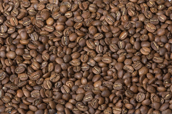 Разновидности кофейных сортов Кении