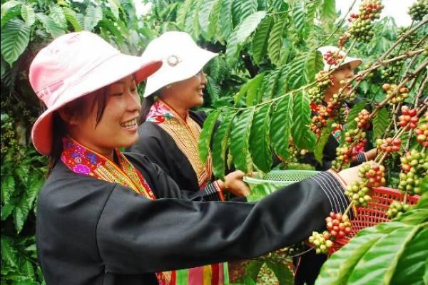 История появления вьетнамского напитка